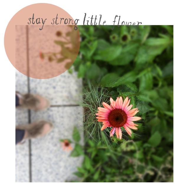 Flower(3)